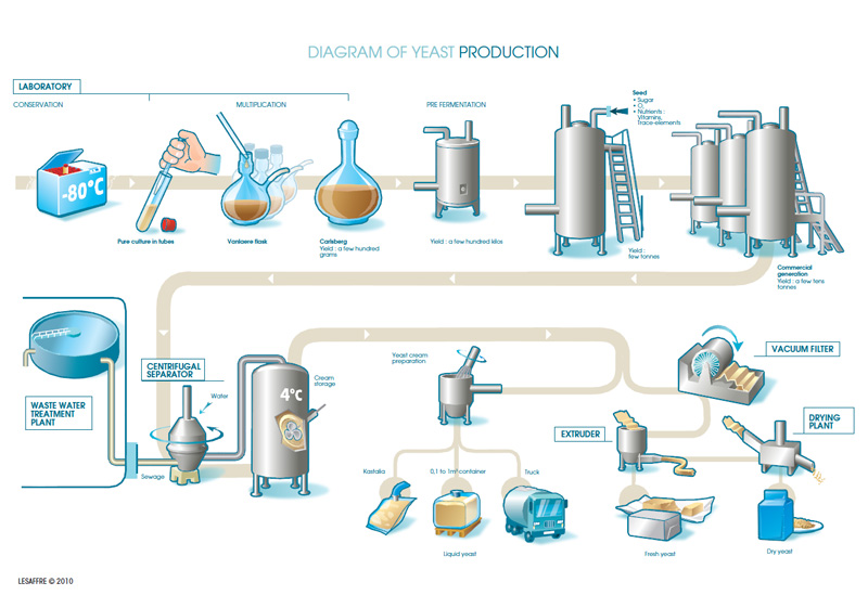 diagram-yeast-production